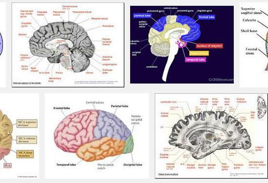 brain-images